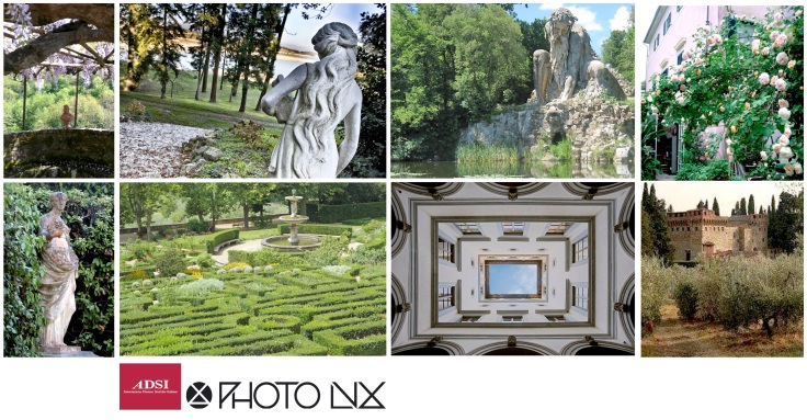 collage-photolux